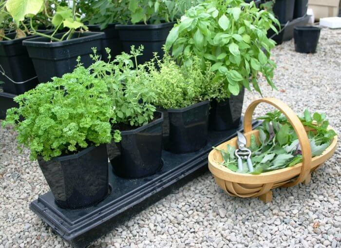 Herb Grow Selvvannende Dyrkesystem Mikrogartneriet